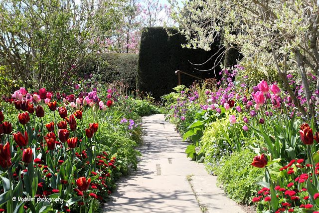 Madelief - Great Dixter House and Garden - tulip border