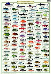 A Laminated Fish Identification Poster Covering The Of Australia