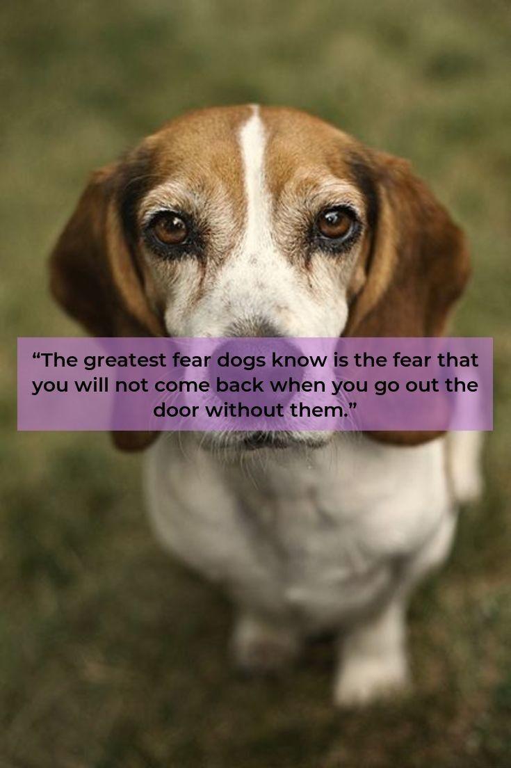 Beagles Forever Beaglestagram Beagles Training Beagle Beagle