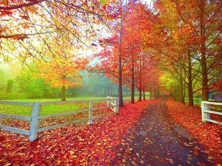 Country Living : Autumn Symphony. Ken Duncan Photography