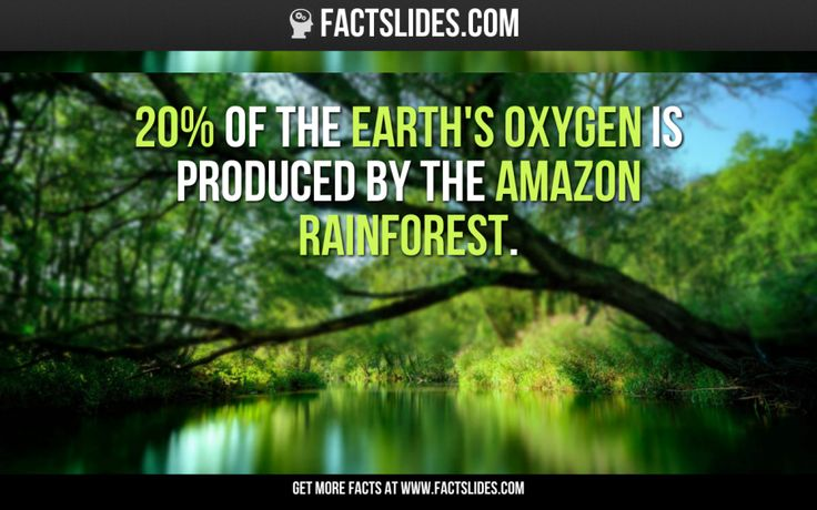 20% of the Earth's oxygen is produced by the Amazon rainforest.