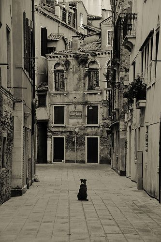 Black and White image of a timeless Italian Street, with dog   Italy ...