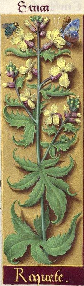 -- Grandes Heures d'Anne de Bretagne, BNF, Ms Latin 9474, 1503-1508, f°217r