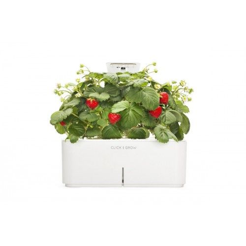 Smartpot starterkit lamp combo with Strawberry and lamp, now available on http://mustbuy.co.za/home-and-garden/click-and-grow/smartpot-starterkit-lamp-combo-with-strawberry-and-lamp