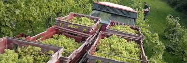 Image result for vineyard