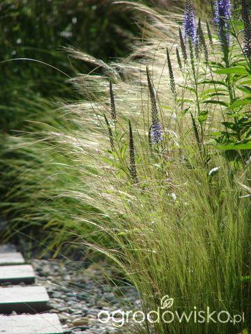 Małymi krokami bo własnymi ręcami... :* - strona 1783 - Forum ogrodnicze - Ogrodowisko