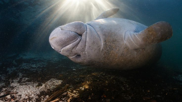 500px / Manatee Afterglow by Phil Symonds