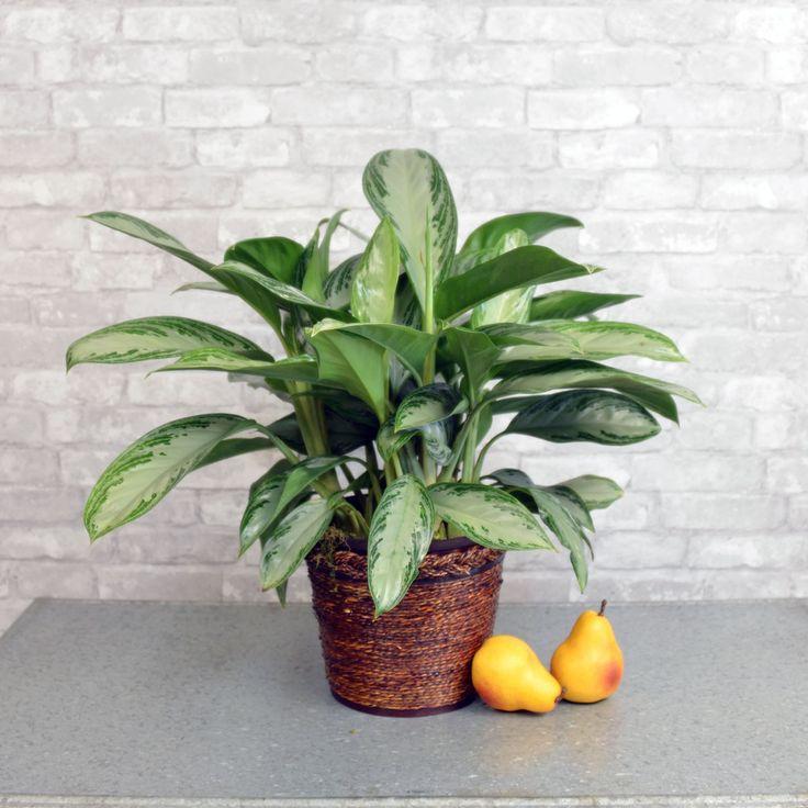 11 Best Plants Of Steel Images On Pinterest Indoor House 400 x 300