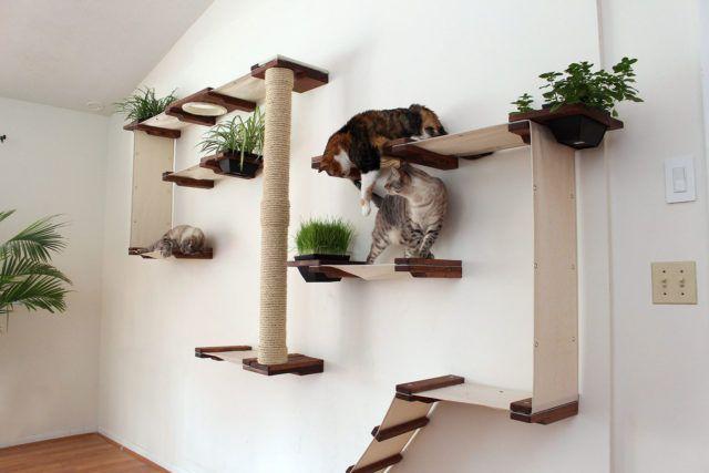 Baue den perfekten Spielplatz für deine Katzen! – Ordnung für Geist&Seele
