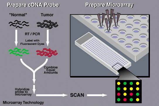 Process demonstrating DNA Microarray Technology