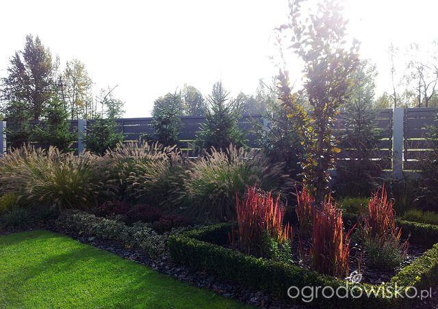 Moja codzienność - ogród Oli - strona 1629 - Forum ogrodnicze - Ogrodowisko