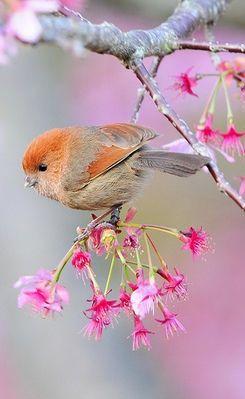 Es un ave porque tiene 2 patas y 2 alas, respira por pulmones, su cuerpo está cubierto de pelo y es ovíparo y cuidan a sus crías