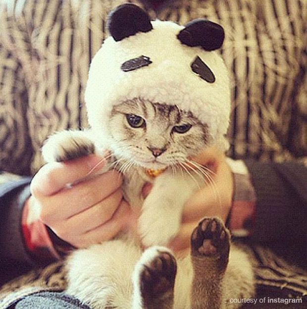 31 Halloween Cat Costumes For People Who REALLY Love Their Cats