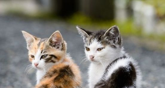 cute cats (4)