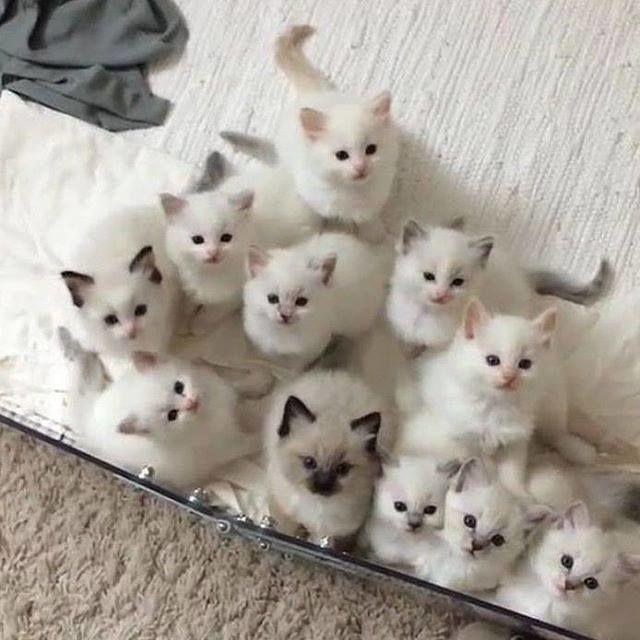 Kittens !!! WANT !!!