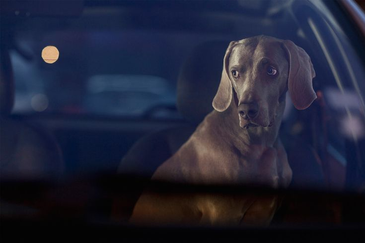 "UK based photographer Martin Usborne captures what those dogs might feel like in this beautiful, emotional set called The Silence of Dogs in Cars. Although the photos are not candid, as much time goes in to planning the location and finding the perfect vehicle and pup, Usborne captures those puppy dog eyes in a way that begs ""Don't leave me!"""