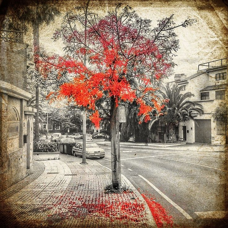 Red over gray