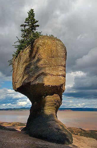 Flower Pot Rock, Hopewell Rocks, NB