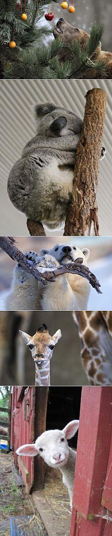 Krásné fotky zvířat - Věda a život