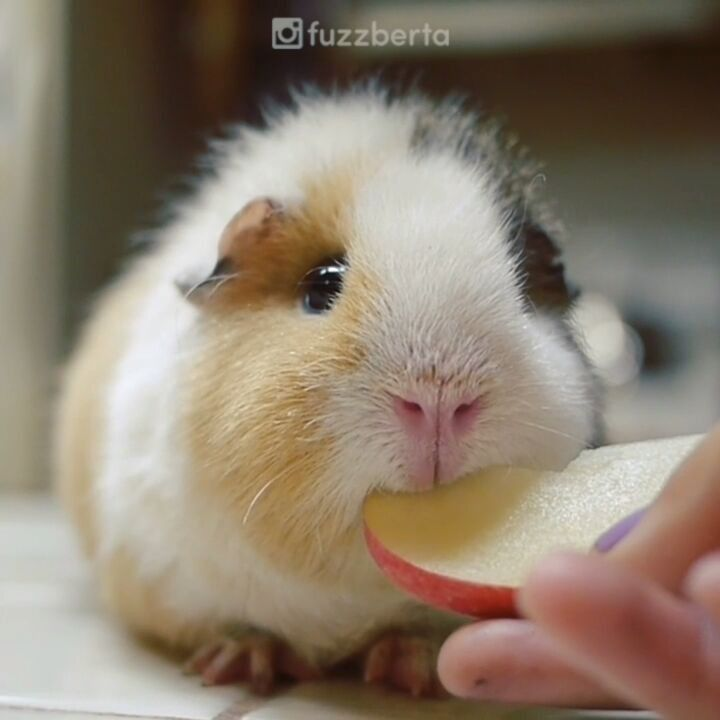#tb to when we first got Jennifuzz and she didn't recognize anything as food. Now she recognizes EVERYTHING as food!! Oh how fuzz we've come...