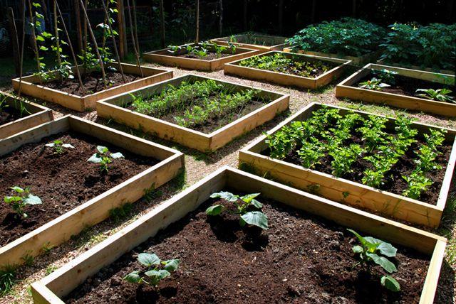 Умная посадка - залог успеха: личный опыт бывалого огородника