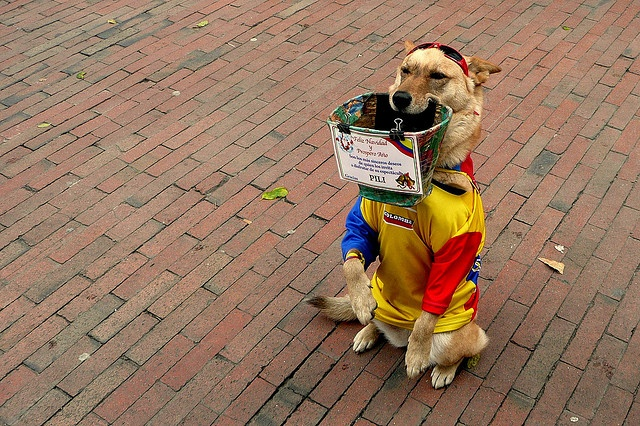 Will wag tail for money. Bogota
