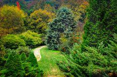 ağaçlar hisse için fotoğrafın üstüne, sarı, turuncu ve kırmızı yaprakları ile sonbahar sahne