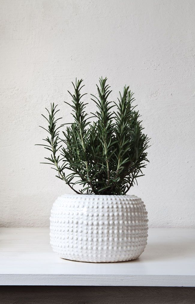 6 plants which can dramatically improve the air quality in your home digikarma - Plants can improve ambience home ...