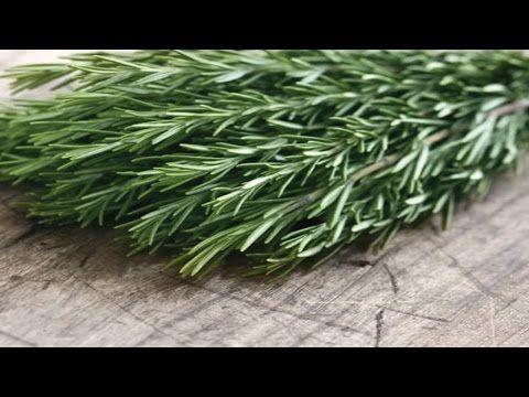 A tudósok megtalálták a növényt, amely segít a az elbutulás ellen, és 75 százalékkal javítja a memóriát - Segithetek.blog.hu