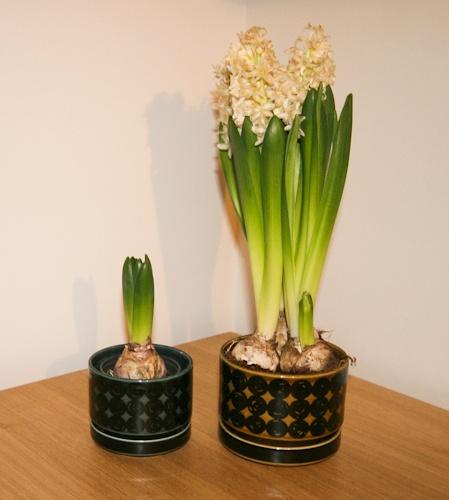 pientä mutta suurta: Old Arabia Kerä flowerpots