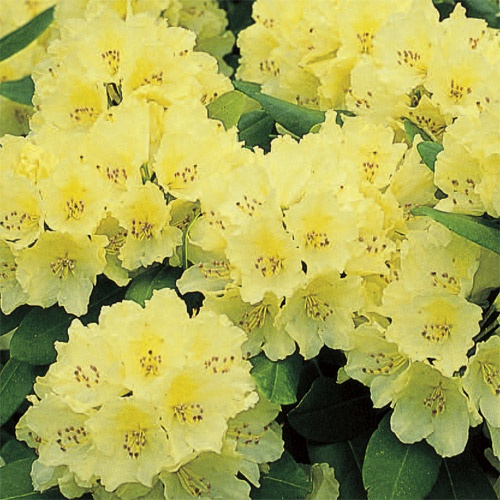 Flower Garden Ideas Wisconsin 192 best shrubs images on pinterest   garden plants, flowering