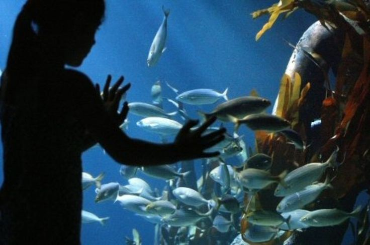 SEA LIFE Munich is an exciting underwater world with 4,500 exotic sea creatures. Kids would have fun time learning about fascinating secrets of marine life.  Image Courtesy: München Tourismus