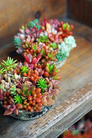 Gorgeous Succulent Planters Instantly Beautifying Your Home
