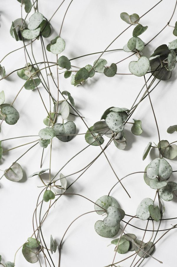 vosgesparis: Inspiration for your home | Botanic prints for plant lovers