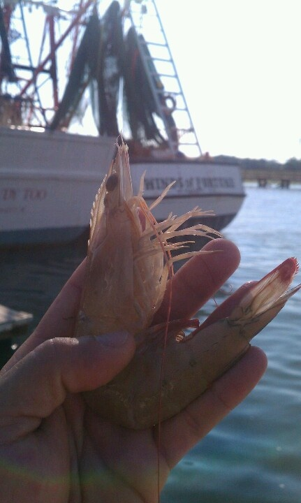 1000 images about fishing crabbing shrimping oyster for South carolina surf fishing