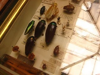 beetles, with labels