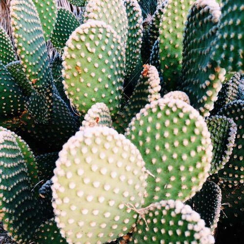 Image via We Heart It #cactus #green #grunge #pale # ...