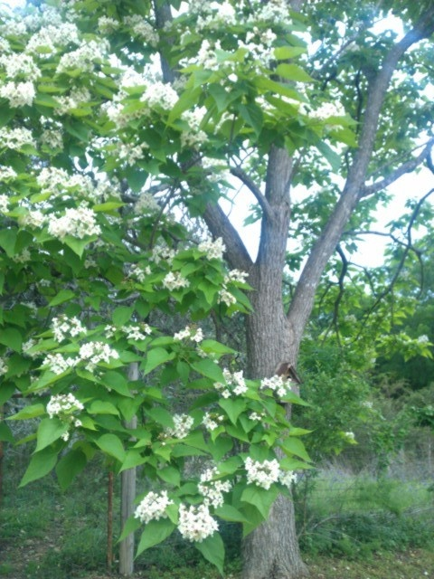 17 best images about a poem as lovely as a tree on for Catalpa worms fishing
