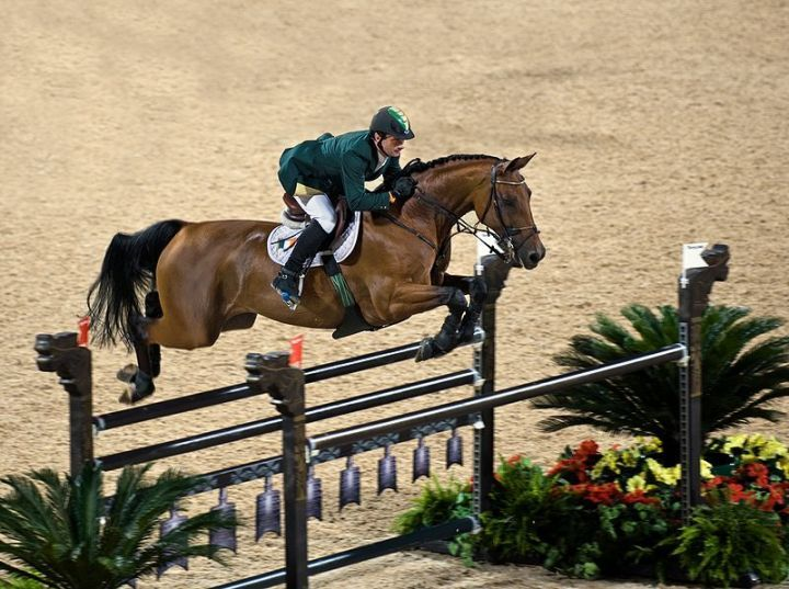 arabian thoroughbred cross for sale | George II – the Elector of Hanover and King of England – founded ...