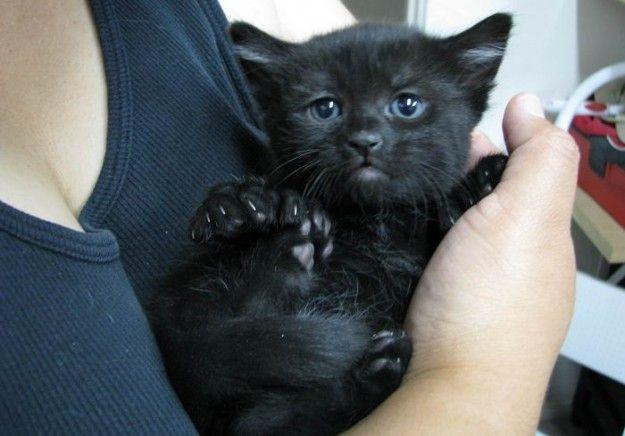 http://static.tuttogratis.it/attualita/fotogallery/628X0/70261/gatto-nero-cucciolo.jpg