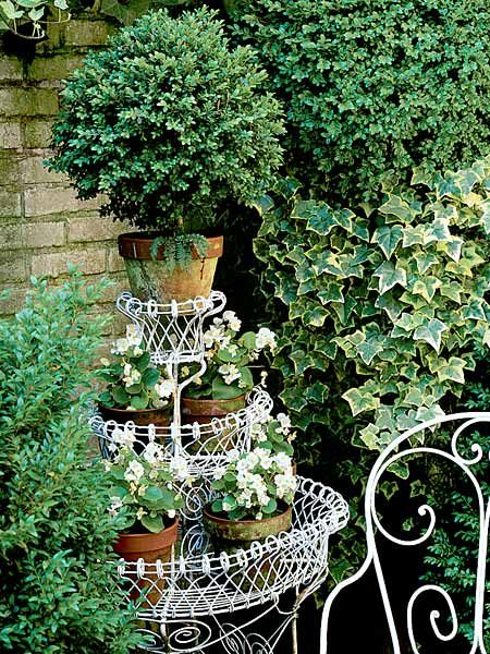 White and green garden.