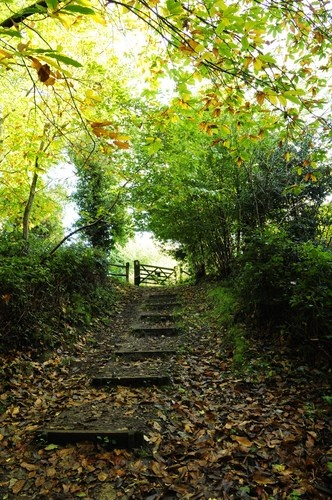 Woodland Pathway, Rusthall, Kent