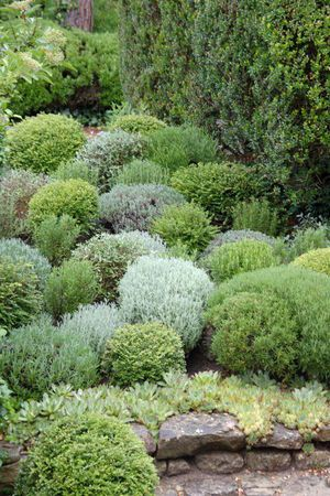 Love the use of different hues of shrubs in the landscape.  Magnificent!!
