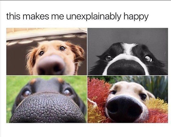 Best Happy Dog Meme Ideas On Pinterest Funny Looking Animals - This dog has some serious self control that will make you laugh