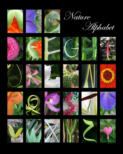 Laila Kujala original nature photography Alphabet Poster | AADL Summer Game