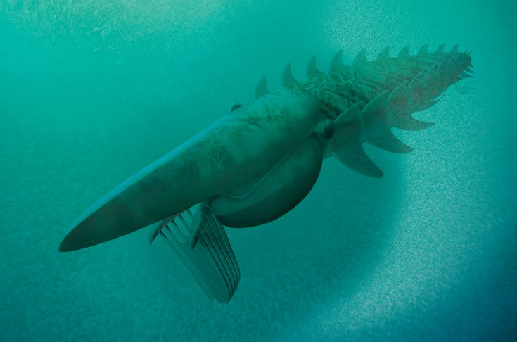 A newly identified prehistoric sea creature fed on plankton and grew to massive sizes – making it the earliest giant filter-feeder.