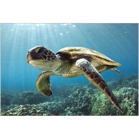 Hawaiian Sea Turtle Photography by Eazl, Size: 24 x 16, Gray