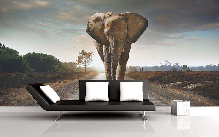 Elefante África, a $69.000 el metro cuadrado.