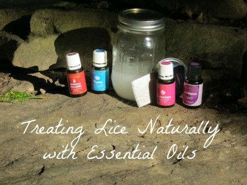 Treating Lice Naturally with Essential oils - This is similar to how we treated our family's first case of head lice.  We did use vinegar diluted in water, though.  That killed the nits and the comb (one regular and one electric) got rid of the adult lice.  This method and what we did are so much better than the shampoos!