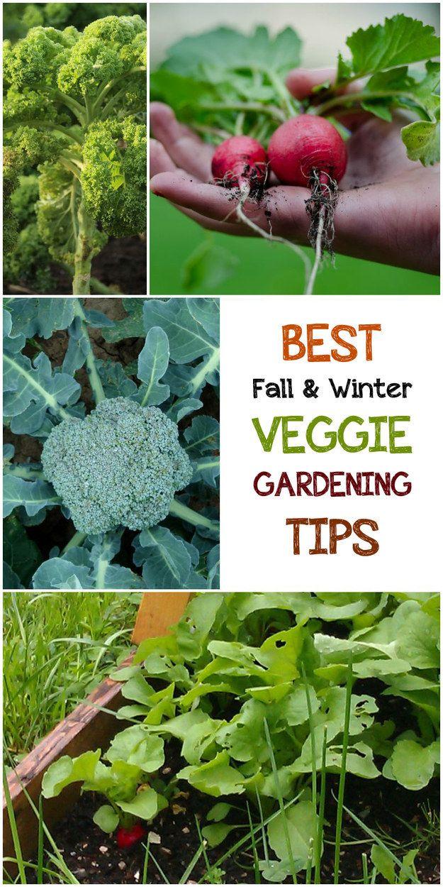 5 Best Fall & Winter Veggie Gardening Tips